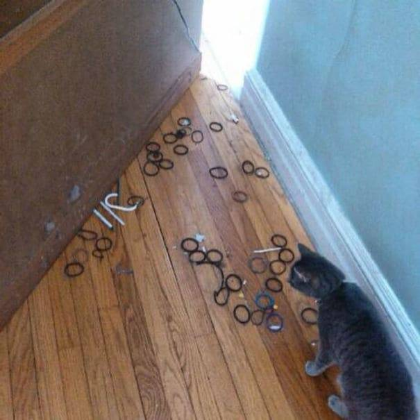So This Is Where All The Hairties Went